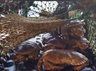European Commission replies to NWWAC advice on brown crab