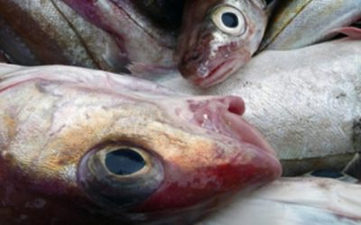 UK Fisheries Administrations stats show drop in landings abroad
