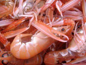 nephrops or prawns