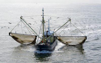 BLOOM make Electric Pulse Fishing Claim