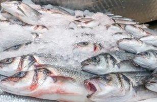 seabass eu fishing vessels