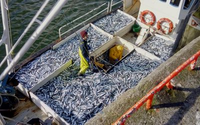 The ICES has released their advice on Herring quota for 2021