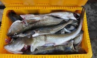 Danish Fisheries Association welcomes compensation for Baltic Sea fishers