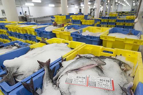 Lorient-Keroman fish market
