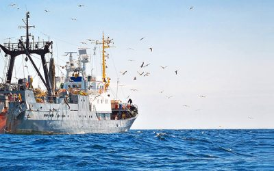 MSC announces new research funding to improve fishery observer safety