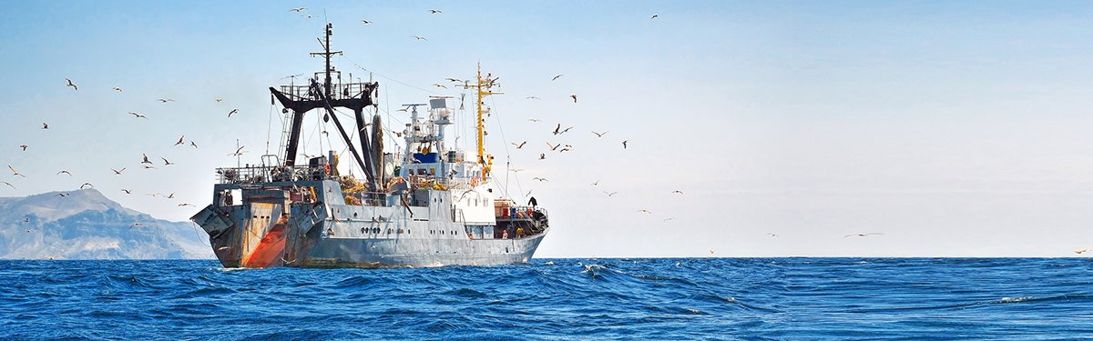 msc fishery observer safety global fishing watch portal