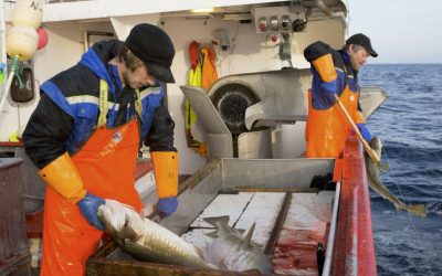 Norwegian fish export values increased in February