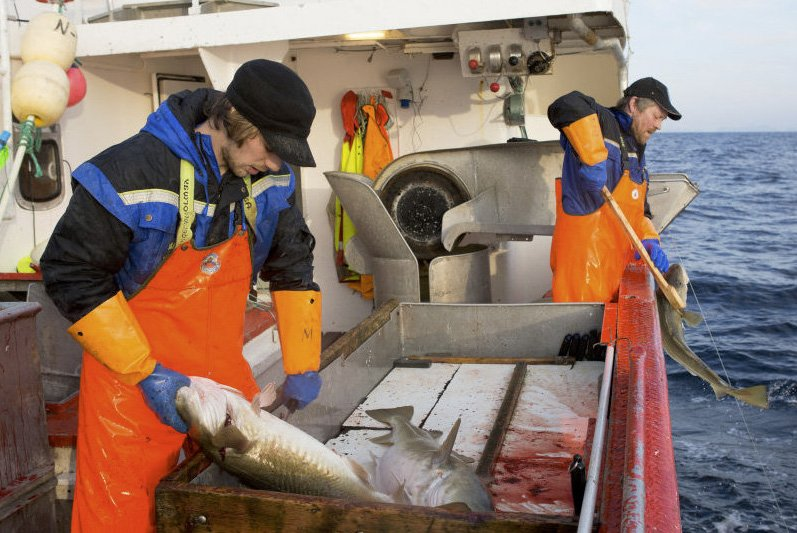 Norwegian fisheries catch samples