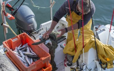 Plymouth aims to become 'new epicentre' of sustainable fishing in England