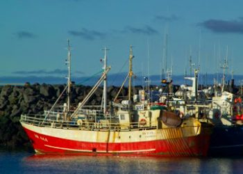 Icelandic Fisheries Minister issues Total Allowable Catch for 2021
