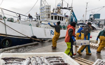 SWFPA calls on French Protectionists to drop agenda and to work together