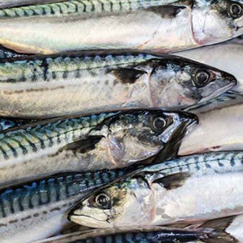 Norwegian fresh mackerel exports