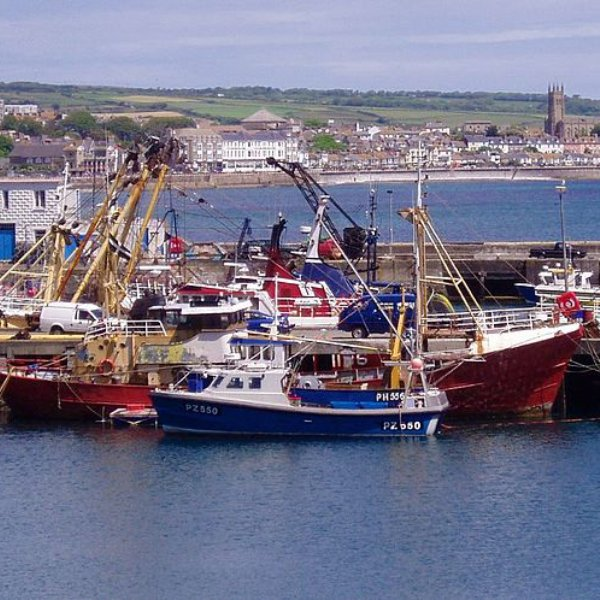 newlyn fish auction online