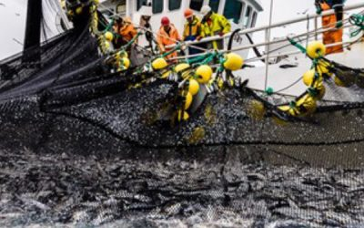 Shutdown Seismic Surveys in the North Sea says Norwegian fisheries
