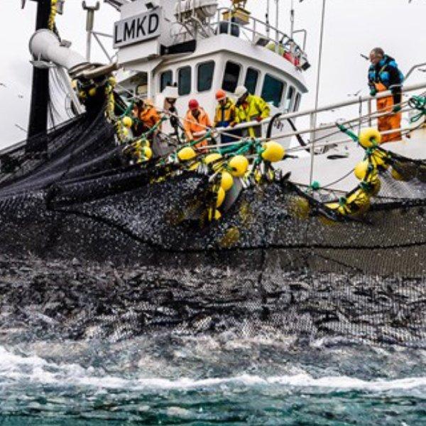 Norwegian fisheries seismic surveys