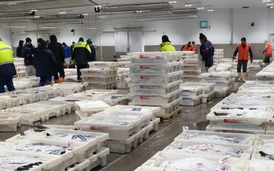 Scottish Seafood Association urges Government Intervention on Boycott