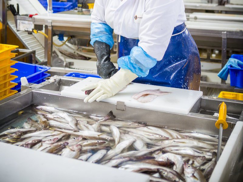 Scottish Fish Processors