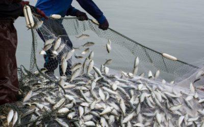 Friend of the Sea Publishes New Sustainability Criteria
