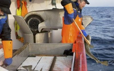 Iceland signs amendment on weighing and recording marine catch