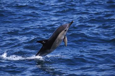 ICES decline dolphin porpoises