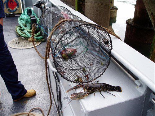 Isle of man fishing