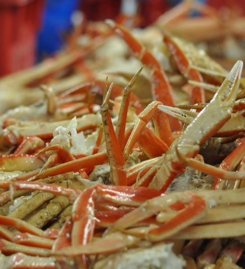 norwegian snaow crab season
