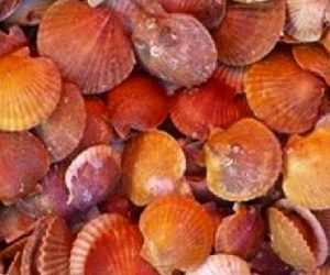 The Isle of Man Queen Scallop Season 2020 is launched
