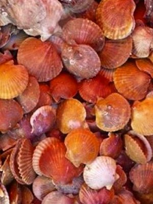 western waters scallop updated