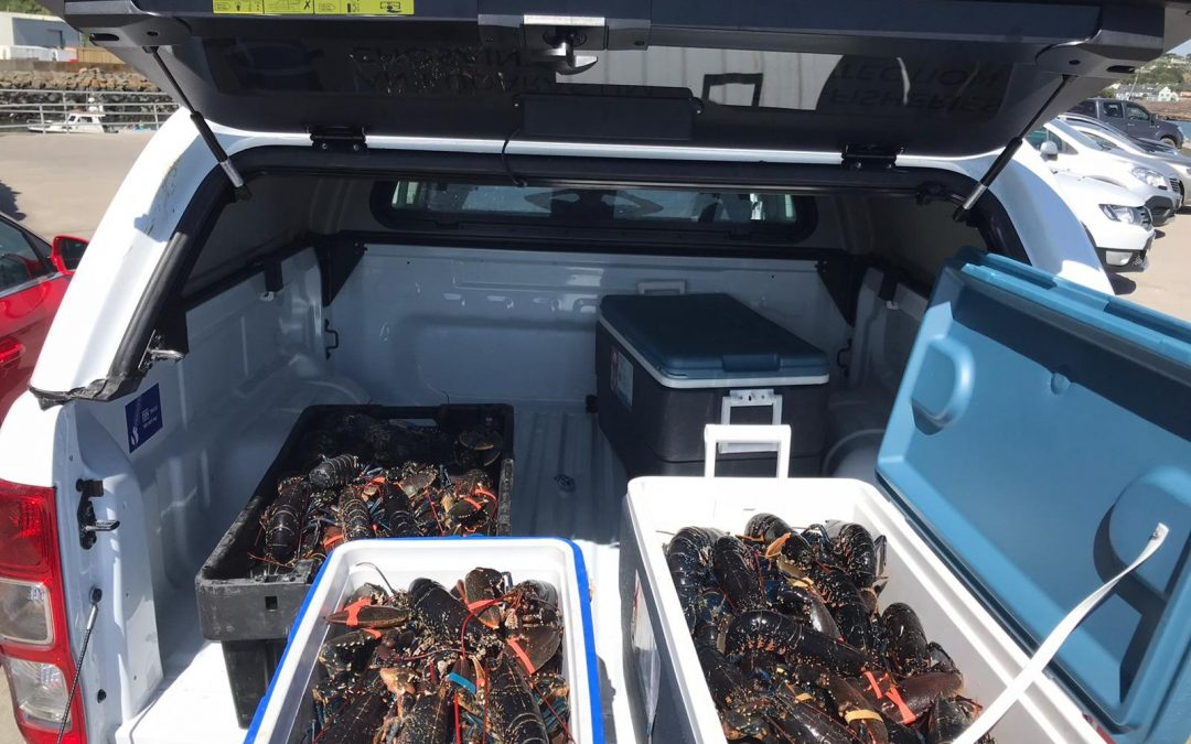 SFPA seize large quantity of illegally caught lobsters in southeast