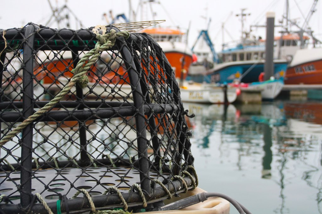 UK Seafood Innovation Fund feasibility