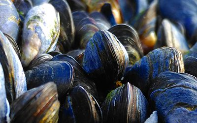 Marine Institute Issues Toxin Warning as Shellfish Harvesting Ceases
