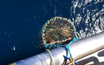 MMO has updated details on Western Waters crab management