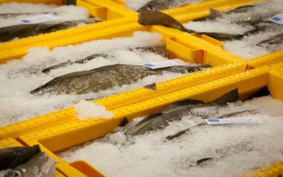 Food and Drink Fortnight – Spotlight on Shetland Seafood Auctions