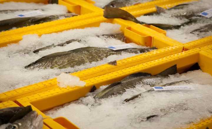 shetland seafood auctions