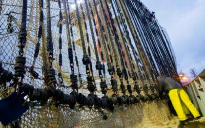German EU Presidency to reopen debate on banned electric-pulse fishing