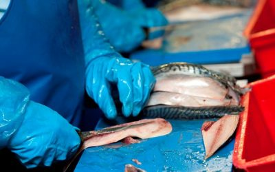 Scottish Seafood Processors calls for review of Seafish & Seafood Scotland remits