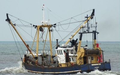 Commission assesses the data collection framework for sustainable fisheries
