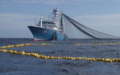 Oceana calls on financial institutions to take lead role in combating IUU fishing