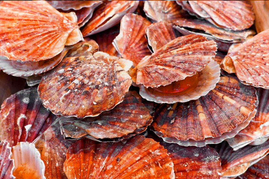 EAPO Support Seafood Consumption