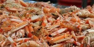 norway lobster fishing opportunities 2021 nephrops north sea