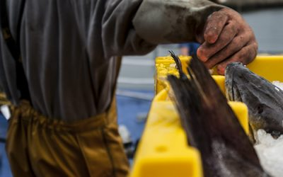 Report recommending Skilled Worker Status for Fishermen Shelved
