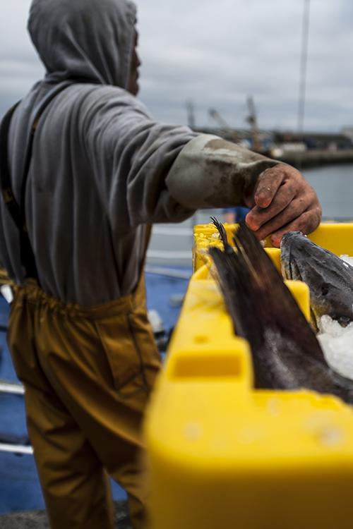 fishermen skilled workers shelved
