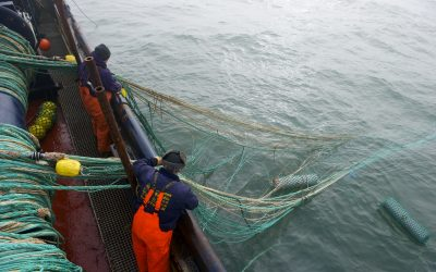 Proposal for Baltic Sea trawling ban is not Solution says fisheries leaders