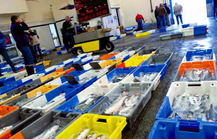 eu fish market 2020