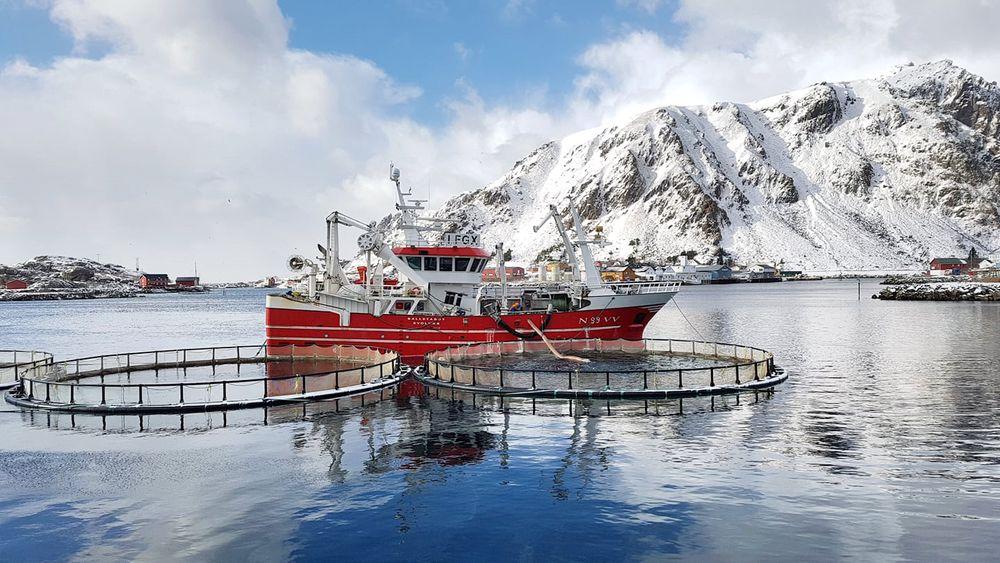 Icelandic Samherji live groundfish
