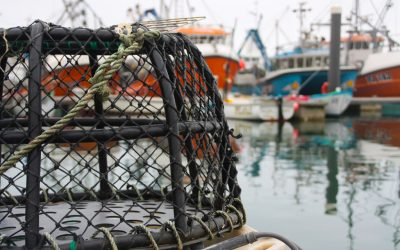 New fisheries management groups to provide sustainability leadership for UK shellfish