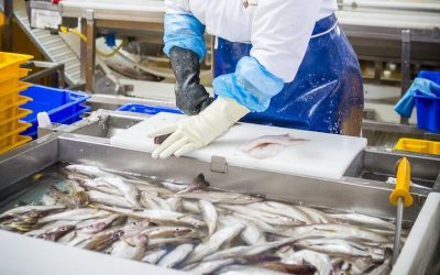 Study supports growth ambition for northeast Scotland seafood processing