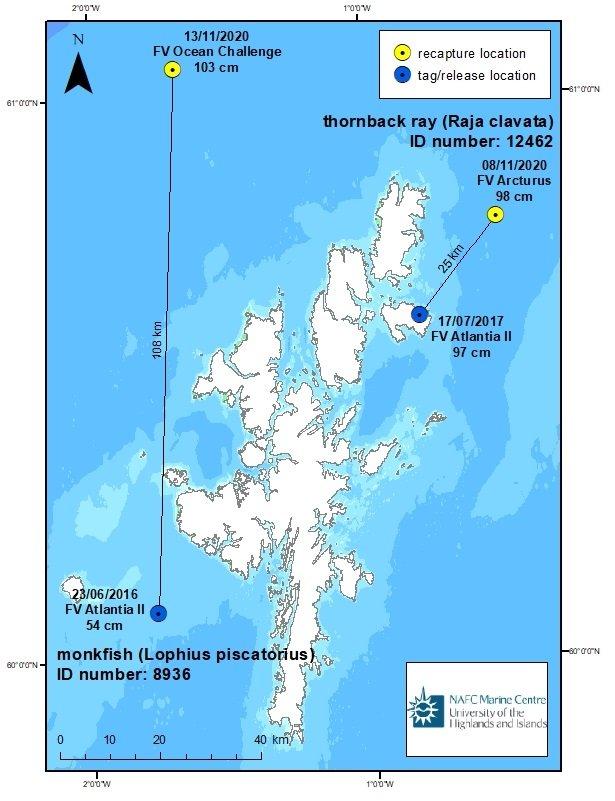 tagged fish shetland waters