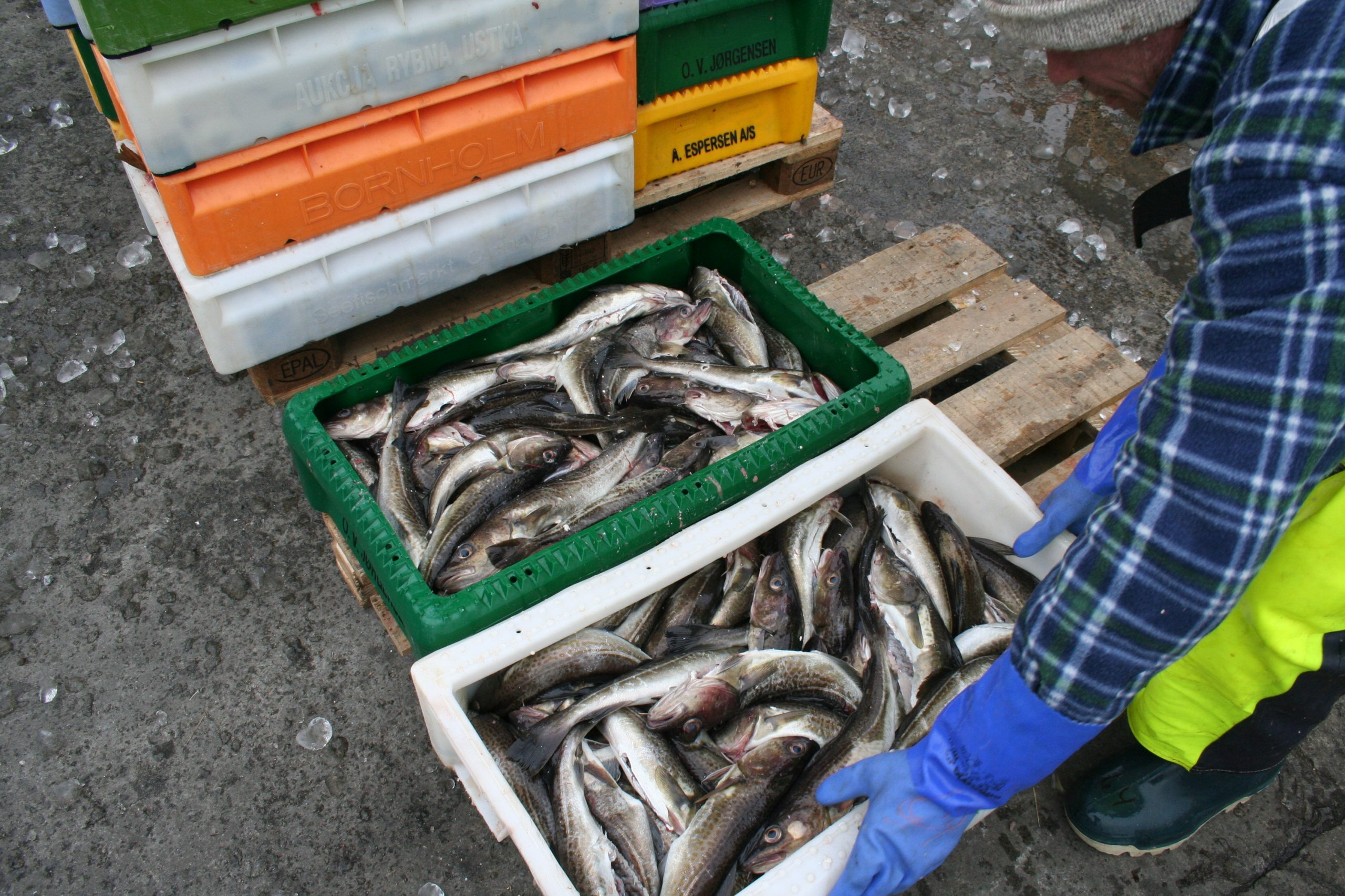 Danish Fisheries Annual quota