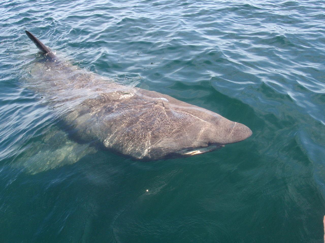 call evidence shark fins
